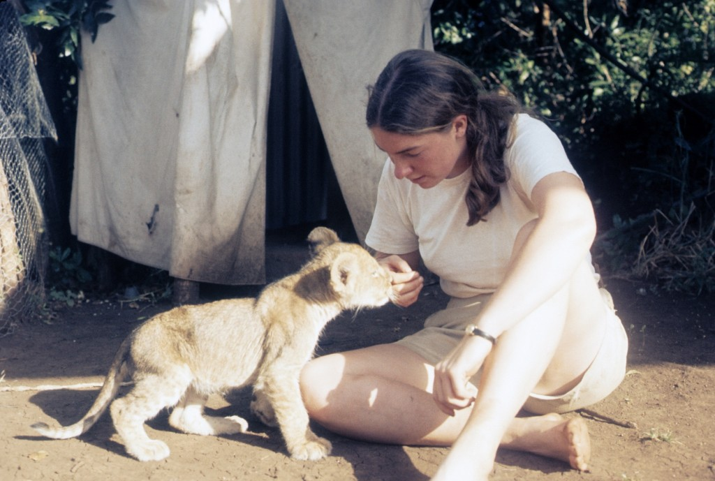 With a lion cub in Ethiopia, 1972.