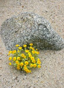 image-small-2